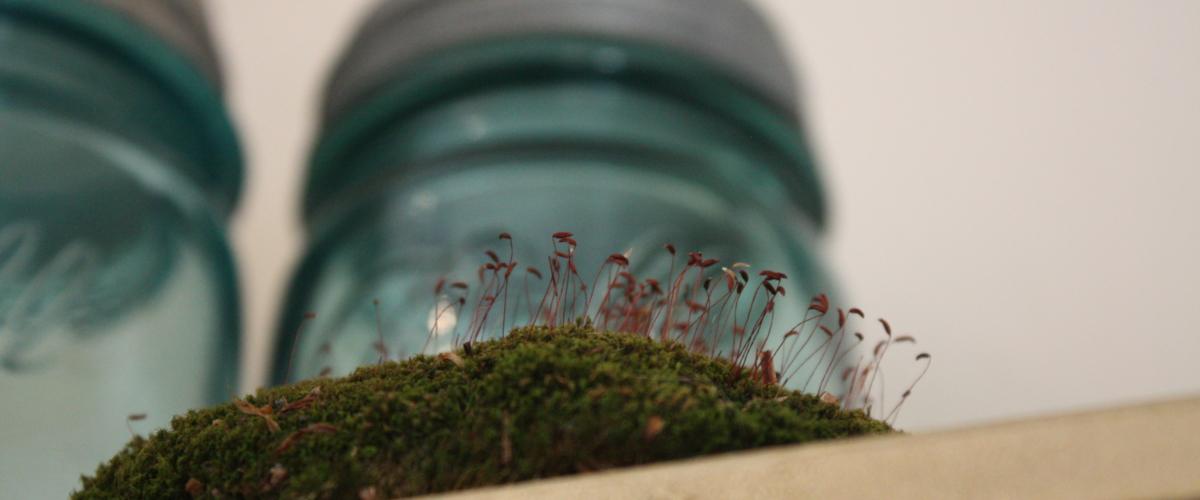 Moss and Jars